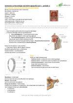 Anatomie en Neurologie Logopedie – Jaar 1 periode 1
